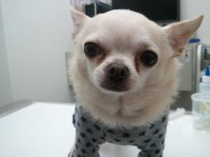 友達犬の写真