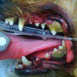 歯石除去前