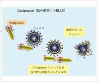 スーパー抗体酵素のイメージ