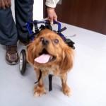 犬の車椅子