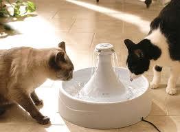 循環式水飲み器