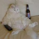 特発性膀胱炎になりやすい猫の一例