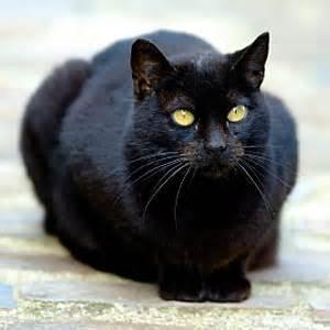 黒いベンガル