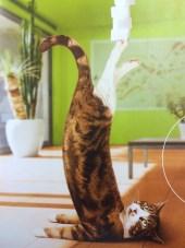 プロジンクのパンフレットの猫