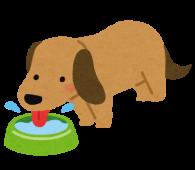 水を飲む犬くん水を飲む犬くん