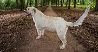 世界一尻尾の長い犬